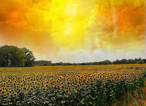 Golden Sunflowers of Nimes by Carver Kearney
