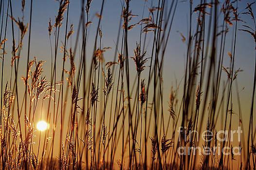 Golden Sunset Grass by Aleksey Tugolukov