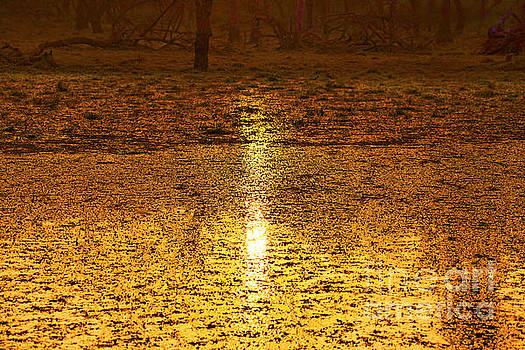 Golden Sunset Reflection by Pravine Chester