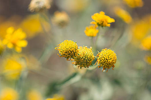 Golden Wildflowers by Sharon Wunder Photography