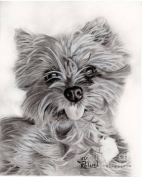 Golden Yorkie by Tracy Roland