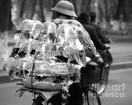 Chuck Kuhn - Goldfish on Bicycle BW