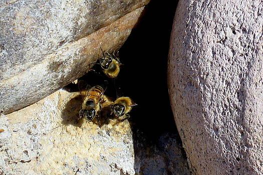 Good Bees by Selma Glunn