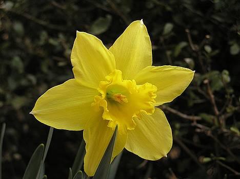Good Morning Sunshine by Diane Frick