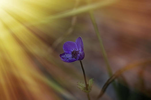 Good Morning Sunshine on Blue by Angela A Stanton