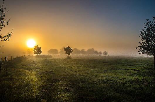Good Morning Yall by Bob Marquis