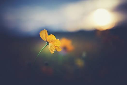 Goodnight Sun by Shane Holsclaw