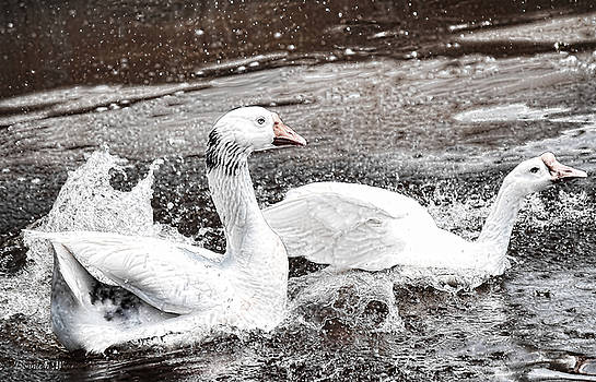Goose by Bonnie Willis