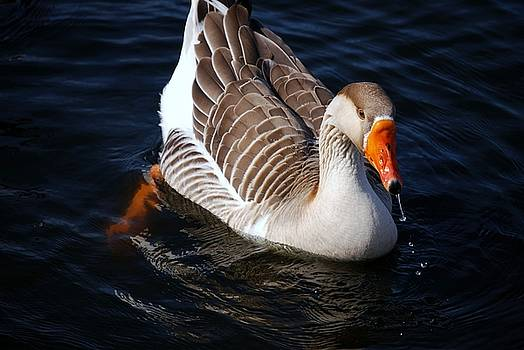 Goose by Charles Bacon Jr