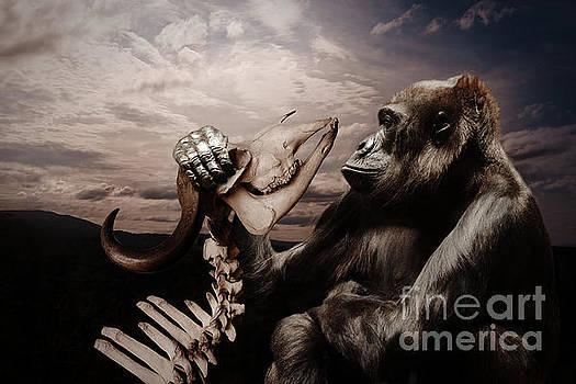Gorilla and Bones by Christine Sponchia