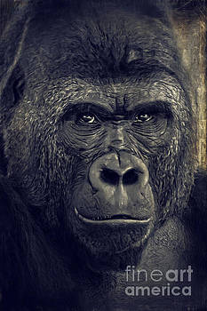 Gorilla by Angela Doelling AD DESIGN Photo and PhotoArt