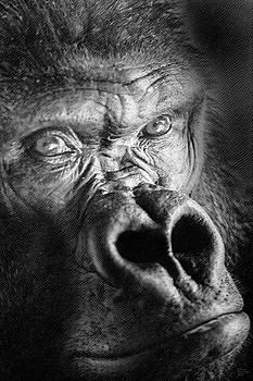Gorilla on Wood by David Millenheft