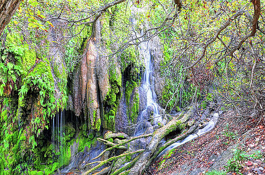Gorman Falls by Savannah Gibbs
