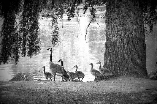 Goslings BW7 by Clarice Lakota