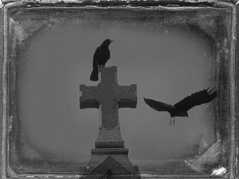 Gothic Grays by Gothicrow Images