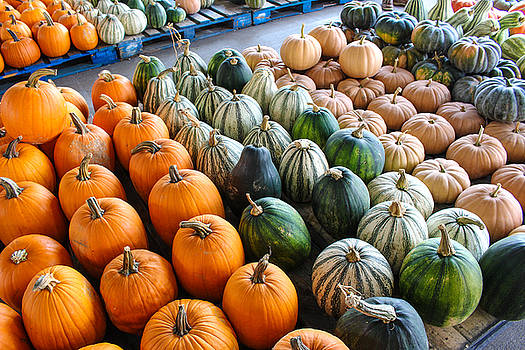 Gourds Galore by Denise Keegan Frawley