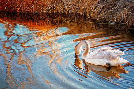 Grace of the Graceful by Gail Gates