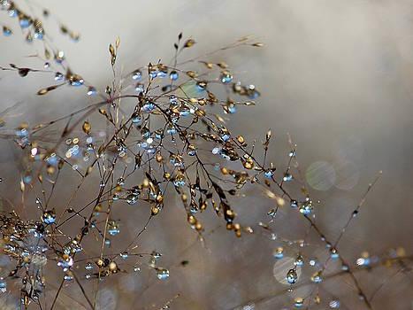 Rosanne Jordan - Graceful Dewdrops