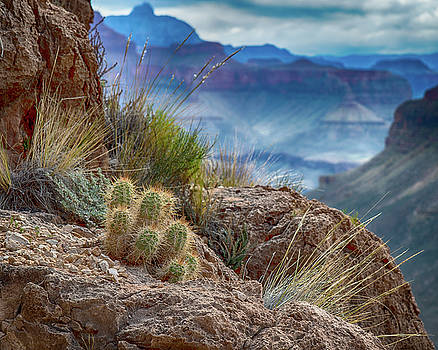 Grand Canyon Cactus by Phil Abrams