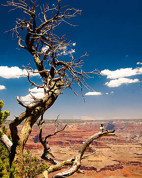Grand Canyon by Ed Selby