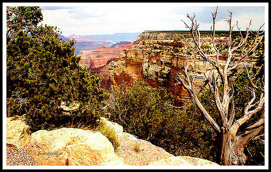 Grand Canyon National Park, Arizona by A Gurmankin