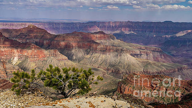 Grand Canyon National Park by Jerry Fornarotto