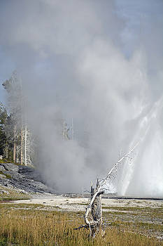 Grand Geyser and Tree Stump by Bruce Gourley