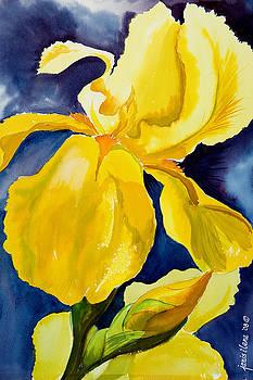 Grandma's Yellow Iris by Janis Grau