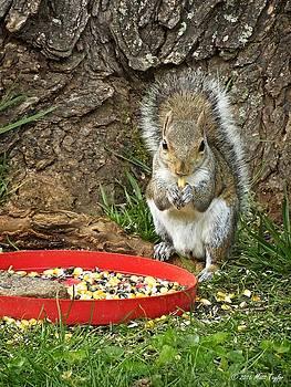 Grandmaw's Backyard Squirrels by Matt Taylor