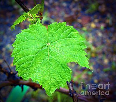Grape Leaf by Diane McDougall