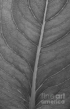 Graphite Leaf by Anita Adams