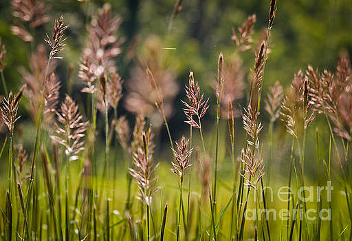 Grass in The Cove by Douglas Stucky