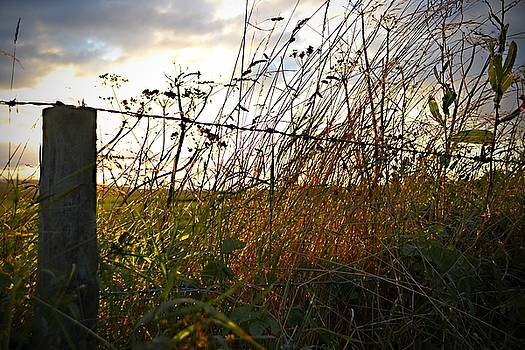 Grass in The Fence by Peter McAuley