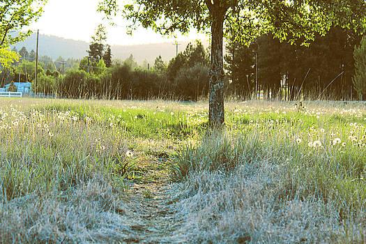Grass Path by Joseph Hawkins