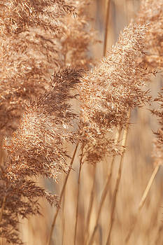 Grasses in the Wind by Christine Amstutz