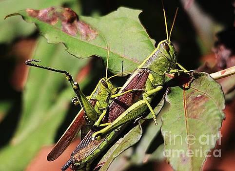 Paulette Thomas - Grasshoppers Mating