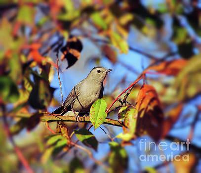 Gray Catbird Framed By Fall by Kerri Farley