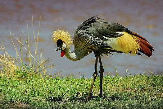 Gray Crowned Crane by Janis Knight