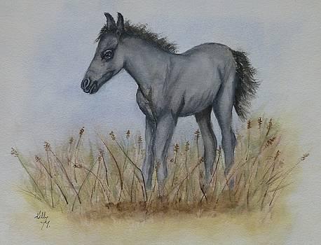 Gray Pony by Kelly Mills