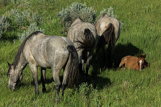 Grazing Horses by John Daly