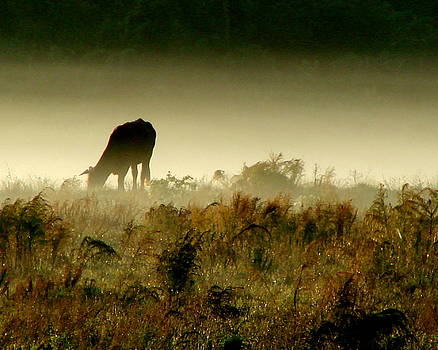 Grazing on a Misty Morning by Kimberly Camacho