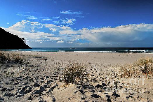 Great Barrier Island by Karen Lewis