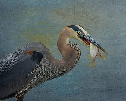 Great Blue Heron And Catch by Sandi OReilly