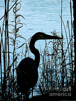 Great Blue Heron by Deniece Platt