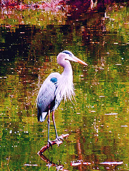 Great Blue Heron  by Don Wright