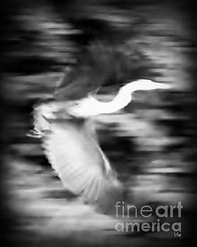 Judy Via-Wolff - Great Blue Heron in Black and White