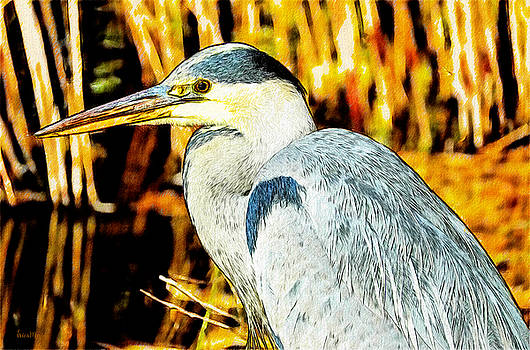 Great Blue Heron in the Reeds by Ericamaxine Price