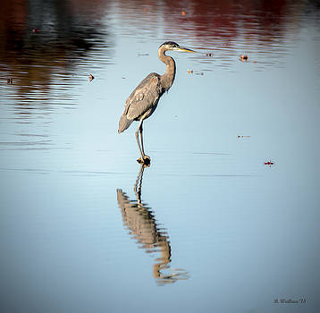 Great Blue Heron Profile by Brian Wallace