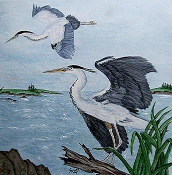 Great Blue Herons in Flight by Sandra Maddox