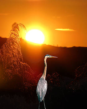 Great Blue Sunset by Adele Moscaritolo